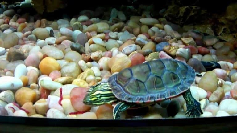 What Do Painted Turtles Eat? Best Foods for Painted Turtles