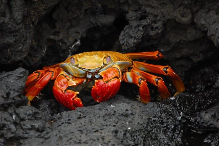 What Do Hermit Crabs Eat? (8 Healthy Foods for Crabs)