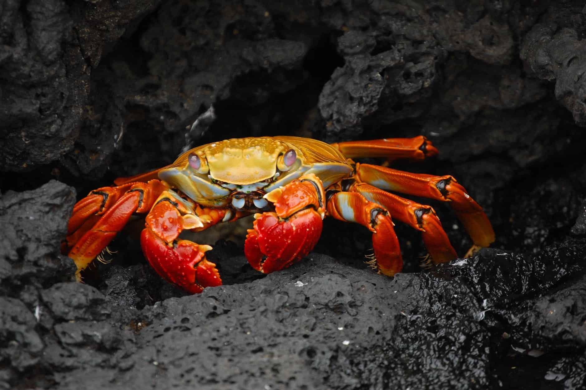 hermit crabs food