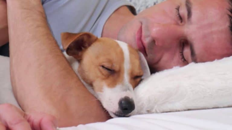 Why Does My Dog Sleep Against Me? The Untold Secret