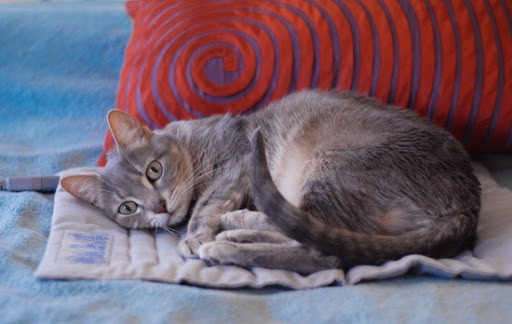 Are Heating Pads Safe for Cats?(Do Cats Love It)?