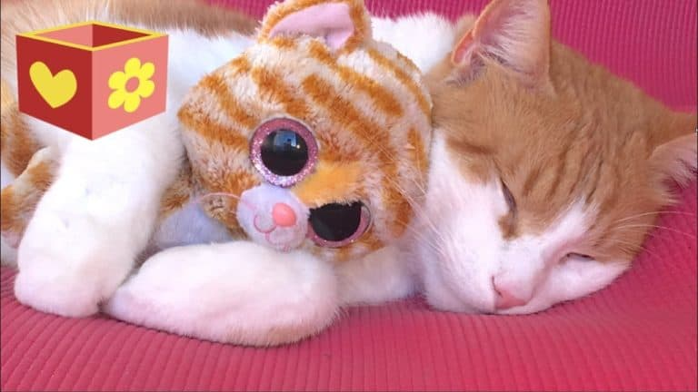 Do Cats Like Stuffed Animals? (What Science Revealed)