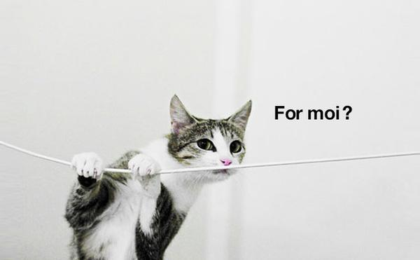 How Do You Protect Oxygen Tubing from a Cat?