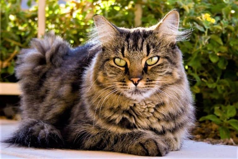 Stage 3 Kidney Disease Cats Life Expectancy (Research)