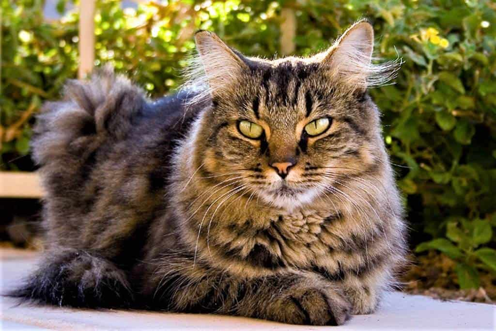 Stage 3 Kidney Disease Cats Life Expectancy New Research