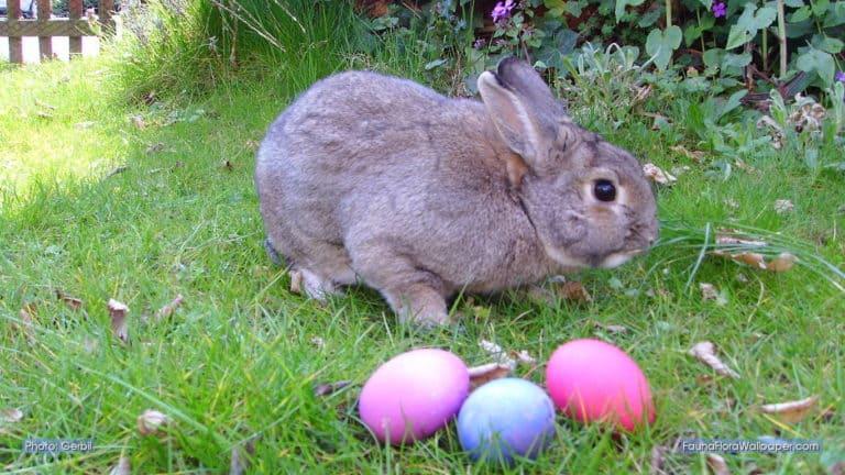 Do Rabbits Lay Eggs? (Debunking the Easter Bunny Myth)