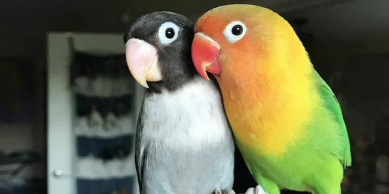 Does PetSmart Sell Birds (Which Birds and Costs)?