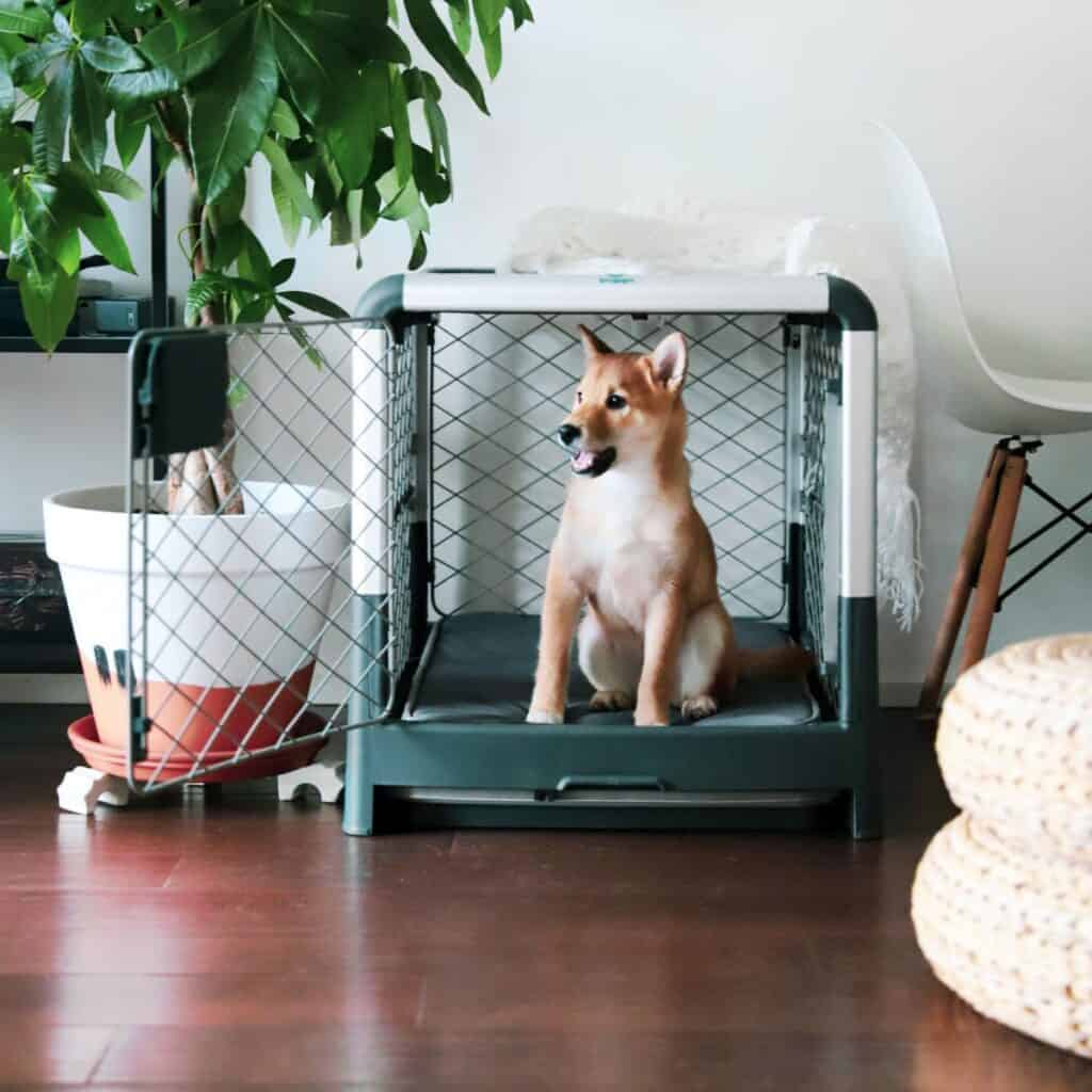 REVOL Collapsible Dog Crate