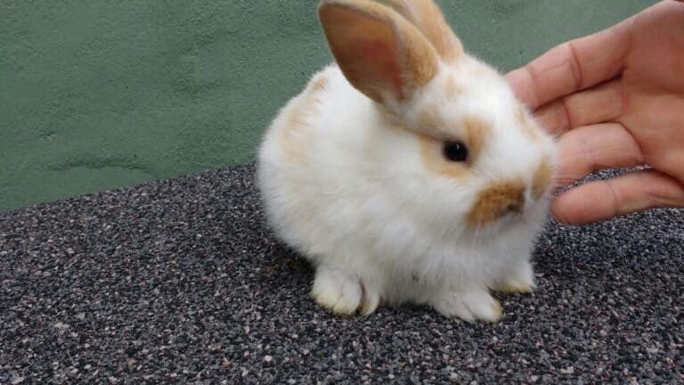 Are Rabbits Immune To Spider Bites? (Everything You Should Know)