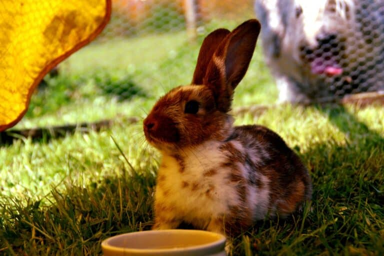 Does Vinegar Keep Rabbits Away (Is It a Waste of Time)?