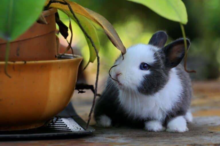 How Do Rabbits Chew Their Food? (Explained)