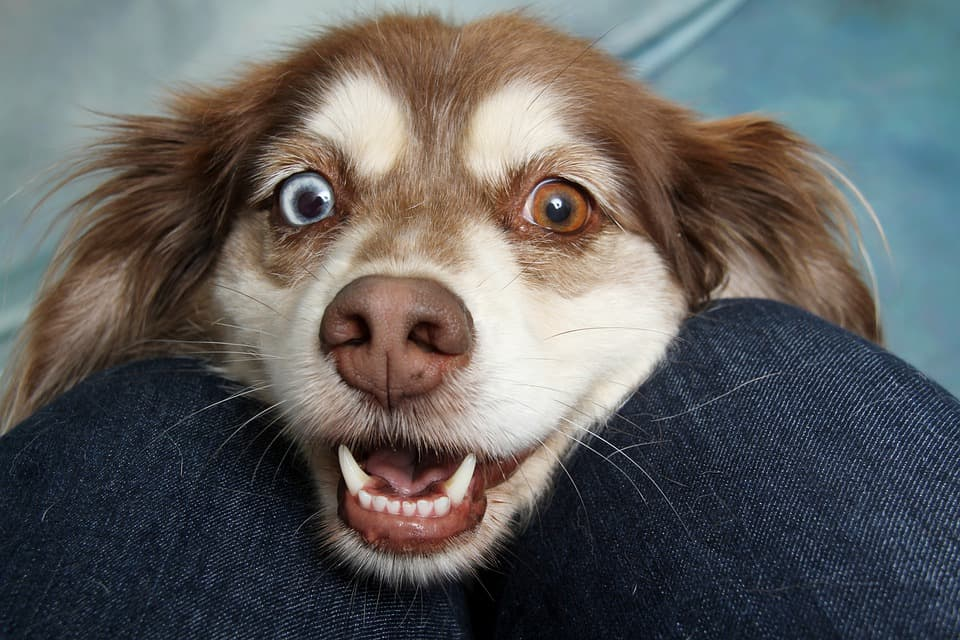 Do Puppies Eyes Get Darker? (Puppy Eye Color Chart)
