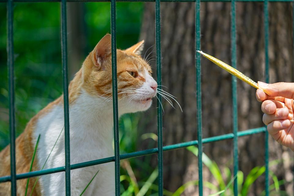 How Do You Discipline A Ragdoll Cat? (3 Easy Steps)