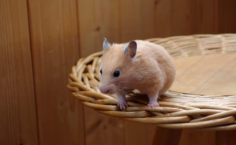 10 Small Pets That Are Not Nocturnal (Or Active at Night)