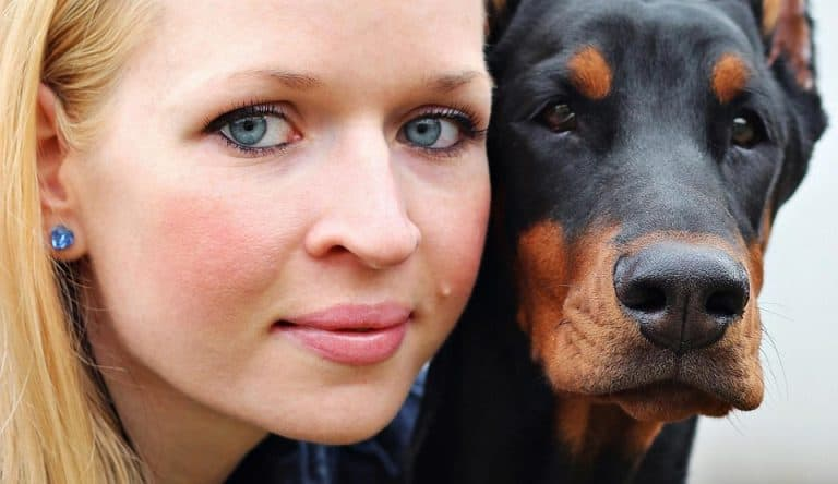 Are Dobermans Lap Dogs? (Facts and Temperaments)