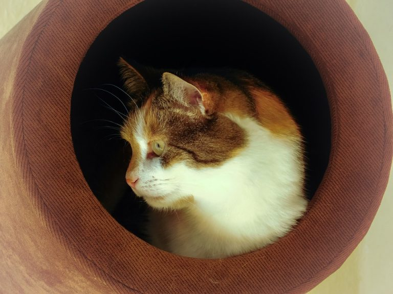 What Is A Cat Cave? (Do Cats Like Cat Caves)?