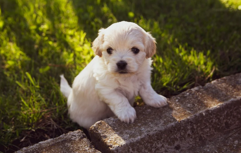 Do Teacup Dogs Bark A Lot? (Facts and Breed Information)